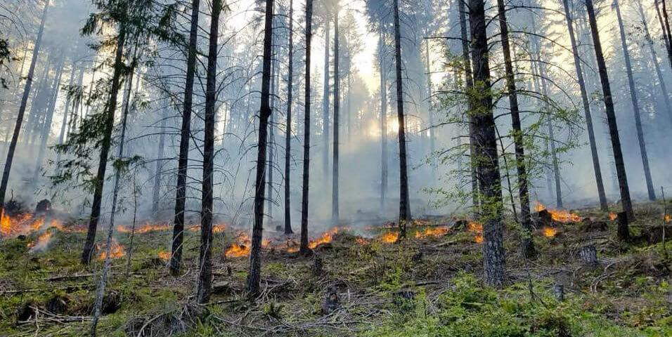 McKEnzie River - Holiday Farm fire